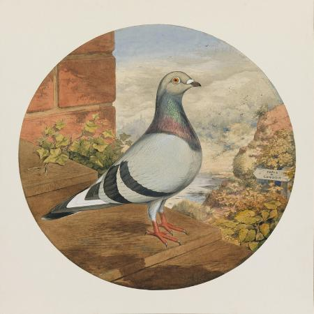 henry-stephen-ludlow-racing-pigeons-paris-to-london-1880
