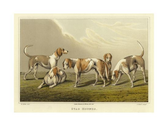 henry-thomas-alken-stag-hounds