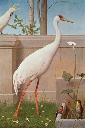 herbert-hofer-indian-crane-cockatoo-bullfinch-and-thrush