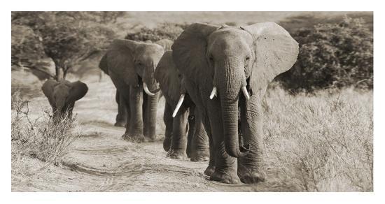 herd-of-african-elephants-kenya