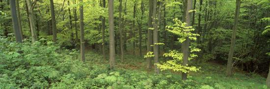 high-angle-view-of-trees-in-a-forest-scarborough-england-united-kingdom