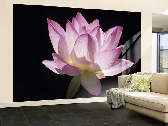 holger-leue-lotus-flower-nelumbo-lutea