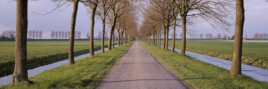 holland-meddembeemster-view-of-a-tree-lined-lane-with-canals