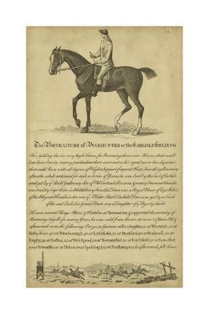 horse-portraiture-iv