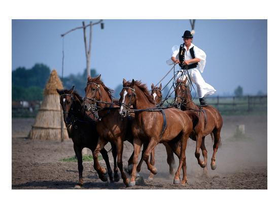 horse-show-in-bugac-bacs-kiskun-hungary