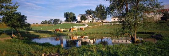 horses-grazing-at-a-farm-amish-country-indiana-usa