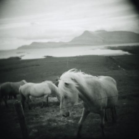 horses-in-pasture