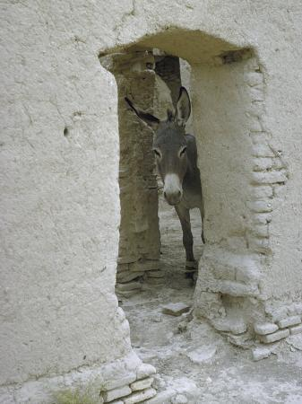 howard-sochurek-donkey-peering-through-open-passage-way-in-white-washed-wall-in-ruined-city