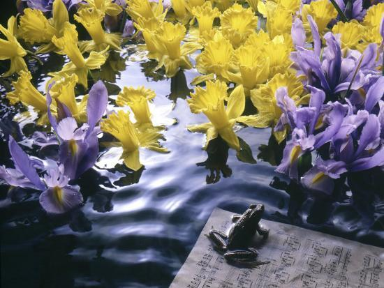 howard-sokol-frog-sheet-music-and-flowers-in-water