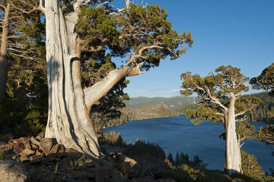 howie-garber-juniper-trees-above-echo-lake-sierra-nevada-mountains