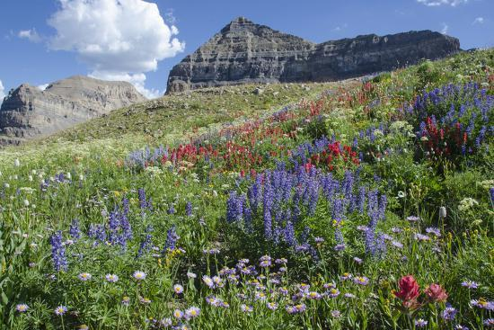 howie-garber-sticky-aster-and-indian-paintbrush-mt-timpanogas-wilderness-area