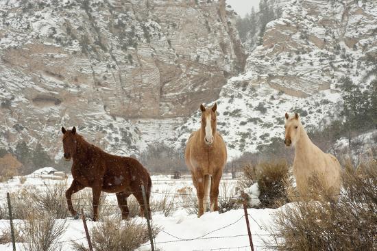 howie-garber-three-horses-in-pasture-with-snow-near-kanab-utah