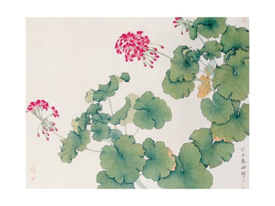 hsi-tsun-chang-geranium