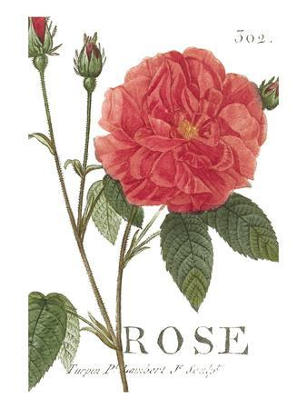wild rose chatrooms Discover our wild rose skin care collection bring harmony and balance to skin with the untamed power of wild rose the inner values of rose plants are just as important as their outer beauty.