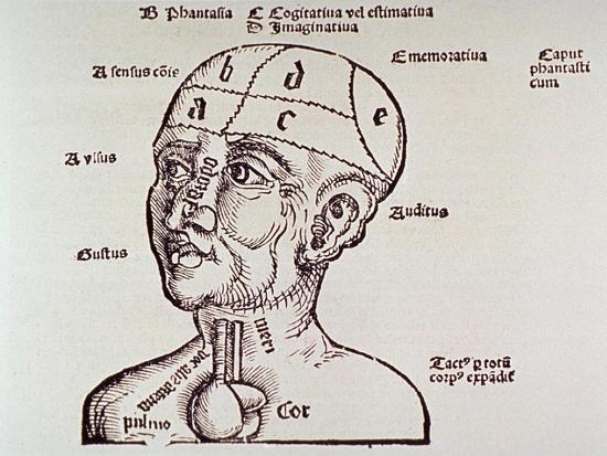 human-head-mapping-sections-of-the-brain-to-corresponding-body-parts-1513
