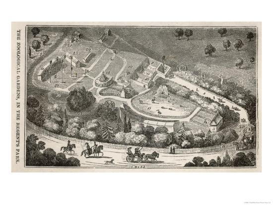 i-dodd-regent-s-park-london-a-bird-s-eye-view-of-the-gardens-of-the-zoological-society