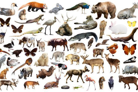 iakov-filimonov-set-of-various-asian-isolated-wild-animals-including-birds-mammals-reptiles-and-insects