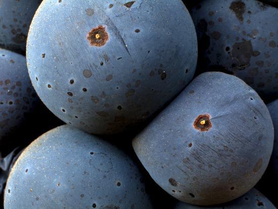 ian-shive-healdsberg-sonoma-county-california-vineyards