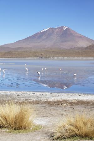 ian-trower-flamingoes-at-laguna-adeyonda-on-altiplano-potosi-department-bolivia-south-america