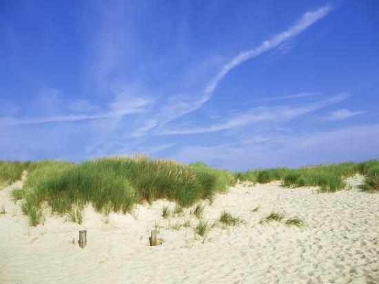 ian-west-beach-and-dunes-with-marram-grass-dorset-uk