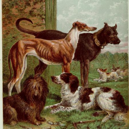 illustration-by-kronheim-of-various-dogs-from-aunt-louisa-s-birthday-gift