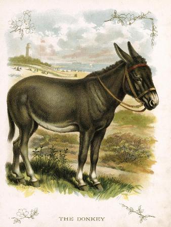 illustration-of-donkey