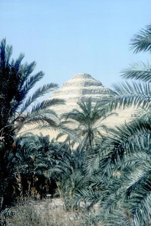 imhotep-step-pyramid-behind-palms-of-king-djoser-saqqara-egypt-3rd-dynasty-c2600-bc