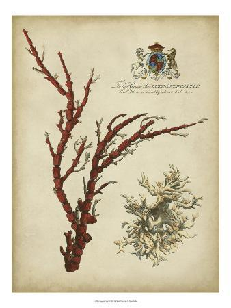 imperial-coral-i