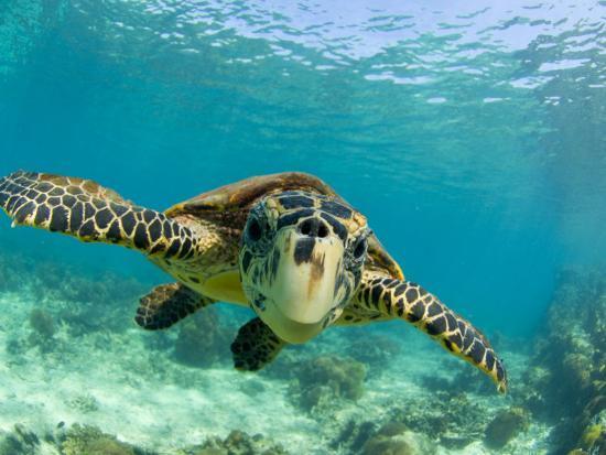 inaki-relanzon-sea-turtle-swimming-underwater-nosy-be-north-madagascar