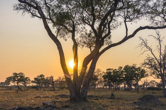 inger-hogstrom-botswana-chobe-national-park-savuti-sun-setting-beyond-rain-trees