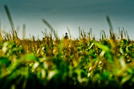 ingo-boelter-germany-schleswig-holstein-amrum-corn-field-lighthouse