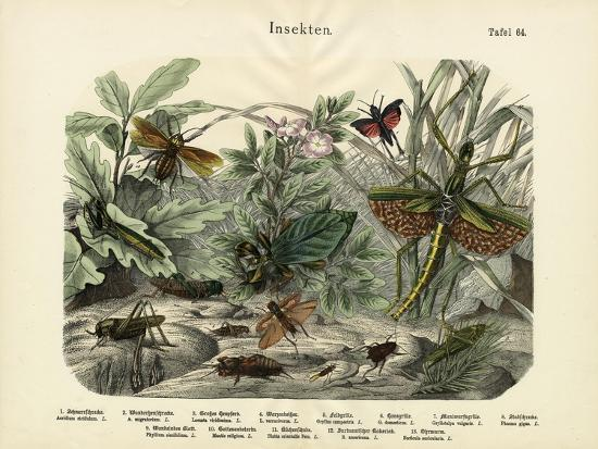 insects-c-1860