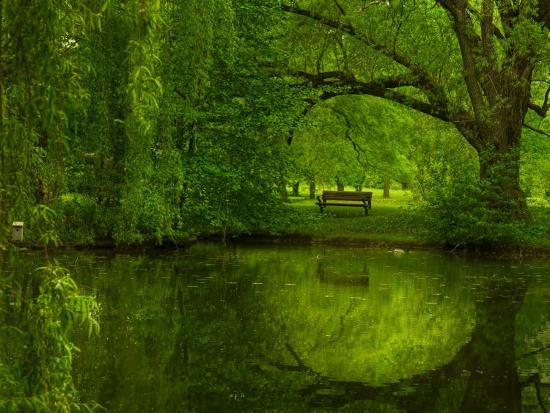 irene-suchocki-green-world
