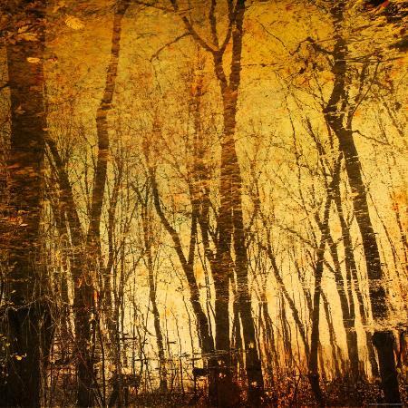 irene-suchocki-tree-reflections