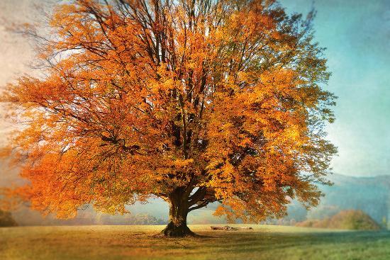 irene-weisz-autumn-s-passion