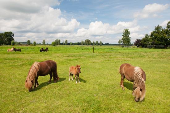 ivonne-wierink-pony-in-the-meadows