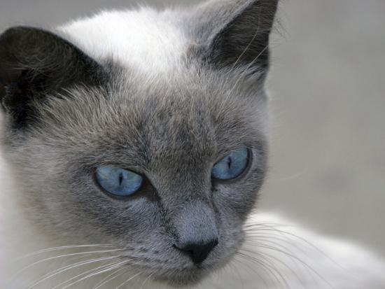 j-d-mcfarlan-blue-eyes