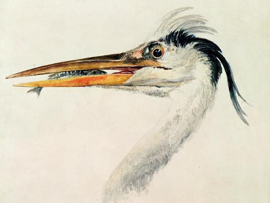 j-m-w-turner-heron-with-a-fish