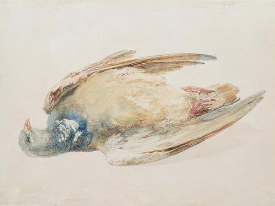 j-m-w-turner-pigeon-from-the-farnley-book-of-birds-c-1816