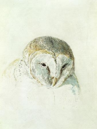 j-m-w-turner-white-barn-owl-from-the-farnley-book-of-birds-c-1816