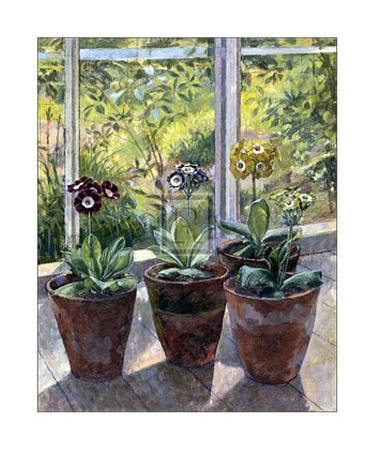 j-morley-four-pots-of-auriculas