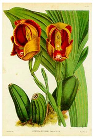 j-nugent-orquideas-ii