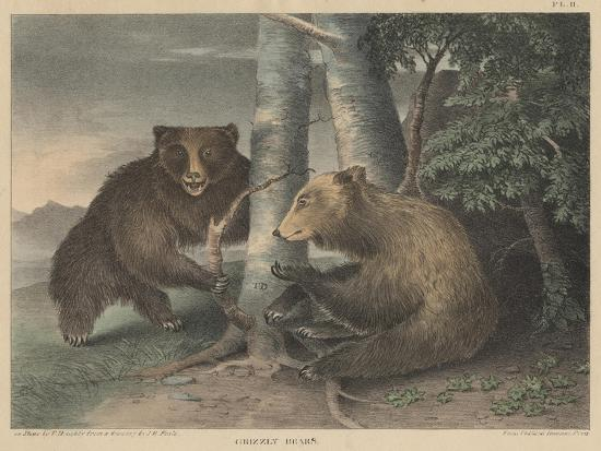 j-r-peale-grizzly-bears