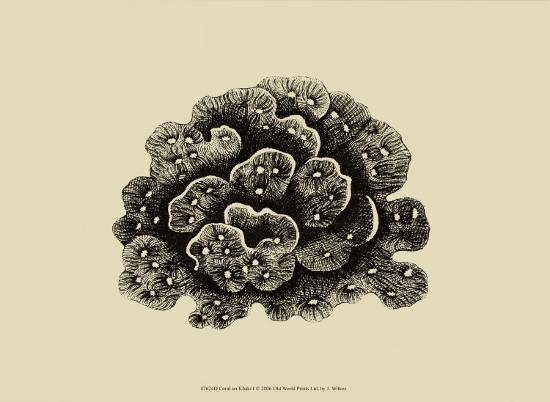 j-wilkes-coral-on-khaki-i