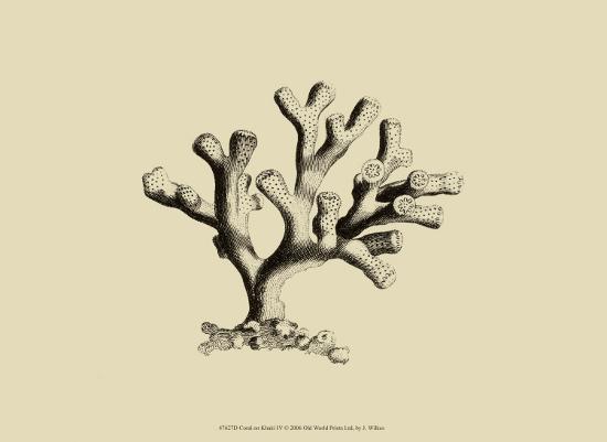 j-wilkes-coral-on-khaki-iv