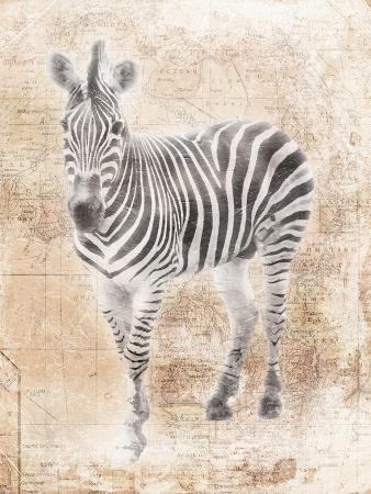 jace-grey-african-zebra