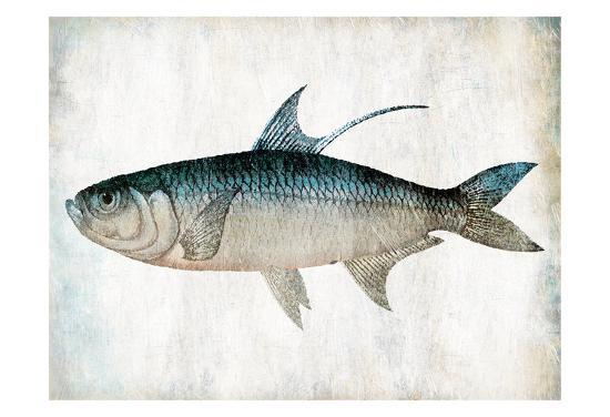 jace-grey-blue-fish