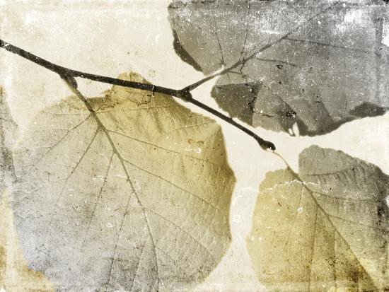 jace-grey-classic-leaves