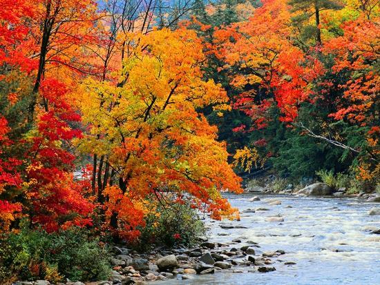 jack-hollingsworth-stream-in-autumn-woods