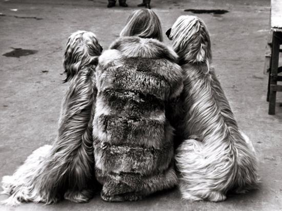 jackie-faith-and-her-afghan-hounds-march-1968